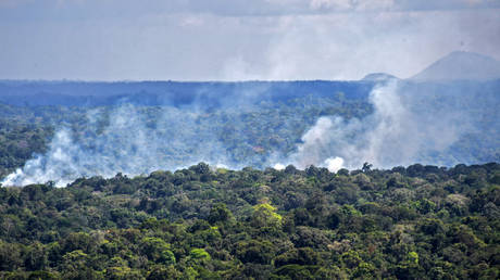 Amazon rainforest now most likely warming Earth's atmosphere, not cooling it, scientists warn