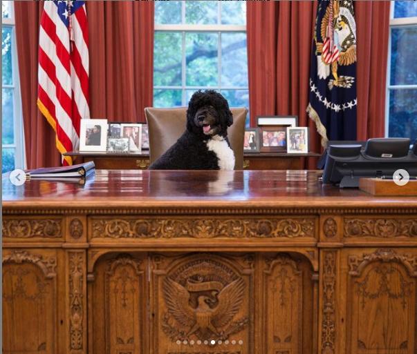 RIP Bo Obama